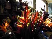 fiori Madeira
